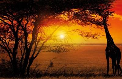 Moçambique e Gorongosa | Pinto Lopes Viagens