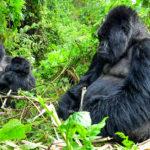 Viagem ao Uganda | Pinto Lopes Viagens