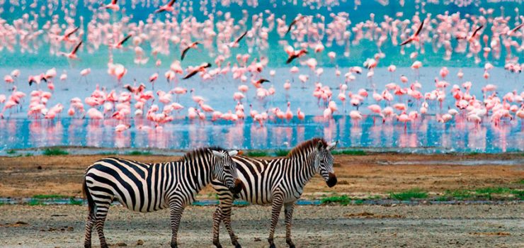 Tanzânia e Zanzibar | Pinto Lopes Viagens